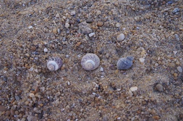 Plaża 6